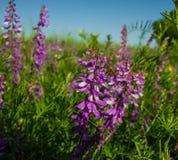 Planta floreciente Imagen de archivo