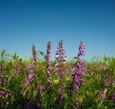 Planta floreciente Foto de archivo libre de regalías