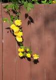 Planta floreciente Fotos de archivo libres de regalías