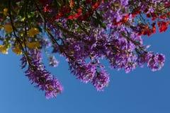 Planta floreciente colorida en la floración con el fondo brillante del cielo azul fotos de archivo