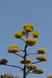 Planta floreciente con el colibrí y las abejas Imágenes de archivo libres de regalías