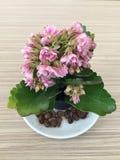 Planta floreciente de la casa Imagenes de archivo