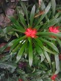 Planta floreciente del follaje de la Florida Foto de archivo
