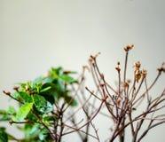 A planta floresce uma, a outra metade morreu imagem de stock