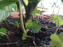 Planta focus Stock Photo