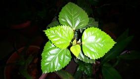 A planta folheia vista próxima que olha bonita imagens de stock