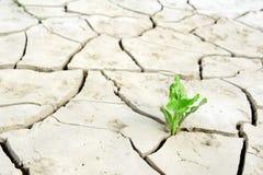 Planta fraca Imagem de Stock