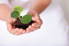 Planta fresca, creciendo de una pequeña pila de tierra Imagen de archivo libre de regalías