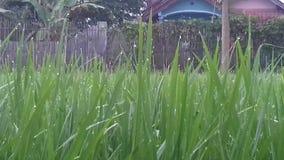 Planta fresca de la hierba Foto de archivo libre de regalías