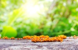 Planta fresca de la primavera con el bokeh y la luz del sol verdes Imagen de archivo