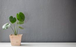 Planta frondosa moderna no potenciômetro de madeira fotografia de stock royalty free