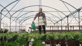 Planta geral Um jardineiro masculino trabalha em uma estufa, plantas molhando com uma lata molhando verde Um dia ensolarado na video estoque