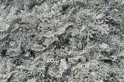 Planta gris Imagen de archivo libre de regalías