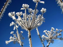Planta helada Fotos de archivo