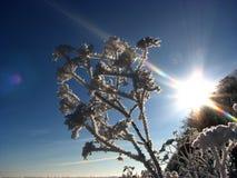 Planta helada Fotografía de archivo libre de regalías