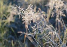 Planta helada por la mañana imagenes de archivo