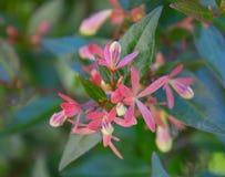 Planta hermosa brillante con las pequeñas flores rosadas fotos de archivo