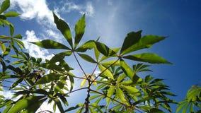 Planta hermosa con el fondo del cielo azul Imagen de archivo libre de regalías