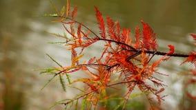Planta hermosa de las hojas en concepto de la flora de la naturaleza del árbol metrajes