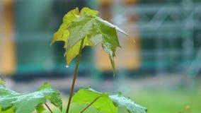 Planta hermosa de las hojas en concepto de la flora de la naturaleza del árbol almacen de metraje de vídeo