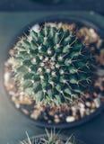 Planta hermosa del cactus en los sunries Foto de archivo libre de regalías