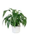 Planta home verde no potenciômetro. imagem de stock royalty free