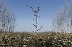 Planta i en mitt av treessnittet Royaltyfri Fotografi