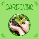 Planta i kvinnliga händer som arbeta i trädgården bakgrund Fotografering för Bildbyråer