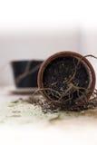 Planta inoperante no derrubada sobre o potenciômetro de flor Fotografia de Stock Royalty Free