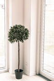 Planta interior en el ambiente brillante Foto de archivo