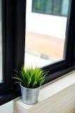 Planta interior en una ventana del cuarto de baño Imagen de archivo libre de regalías
