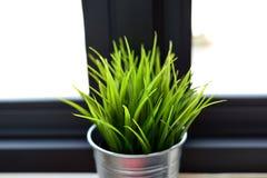 Planta interior en una ventana del cuarto de baño Imágenes de archivo libres de regalías