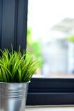 Planta interior en una ventana del cuarto de baño Fotos de archivo