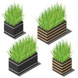 Planta isométrica no grupo pequeno do potenciômetro moderno Ervas verdes frescas ilustração do vetor