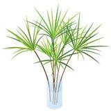Planta isométrica no vaso de vidro moderno Foto de Stock Royalty Free