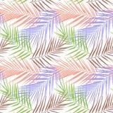 Planta Kentia Ilustração do vetor Imagens de Stock Royalty Free