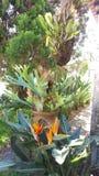 Planta la naranja verde de la belleza Fotos de archivo libres de regalías
