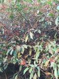 Planta lateral del jardín imagen de archivo libre de regalías