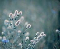 Planta lilás macia delicada das flores no prado do verão fotos de stock royalty free