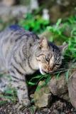 Planta linda el oler del gato Imagen de archivo