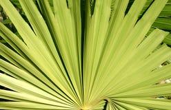 Planta México Imagem de Stock Royalty Free