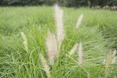 Planta macia Imagem de Stock Royalty Free