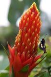Planta magnífica Fotografía de archivo