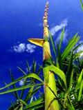A planta a mais em crescimento rápido dos world´s Fotos de Stock