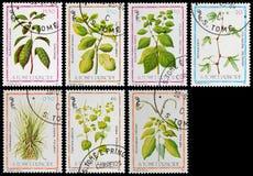 Planta medicinal Imagenes de archivo