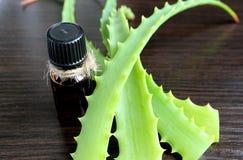 A planta medicinal cresce em casa na soleira do aloés Fotos de Stock