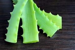 A planta medicinal cresce em casa na soleira do aloés Fotografia de Stock