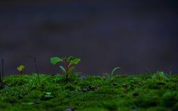 Planta minúscula Fotografía de archivo