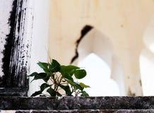 A planta minúscula cresce acima entre a construção Fotos de Stock