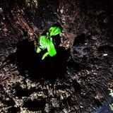 Planta minúscula crescida para dentro de um tronco de árvore fotografia de stock